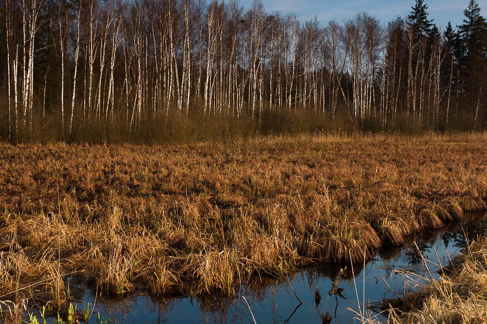 śródleśne łąki