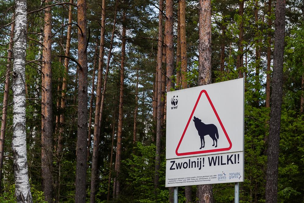 znak drogowy: zwolnij, wilki