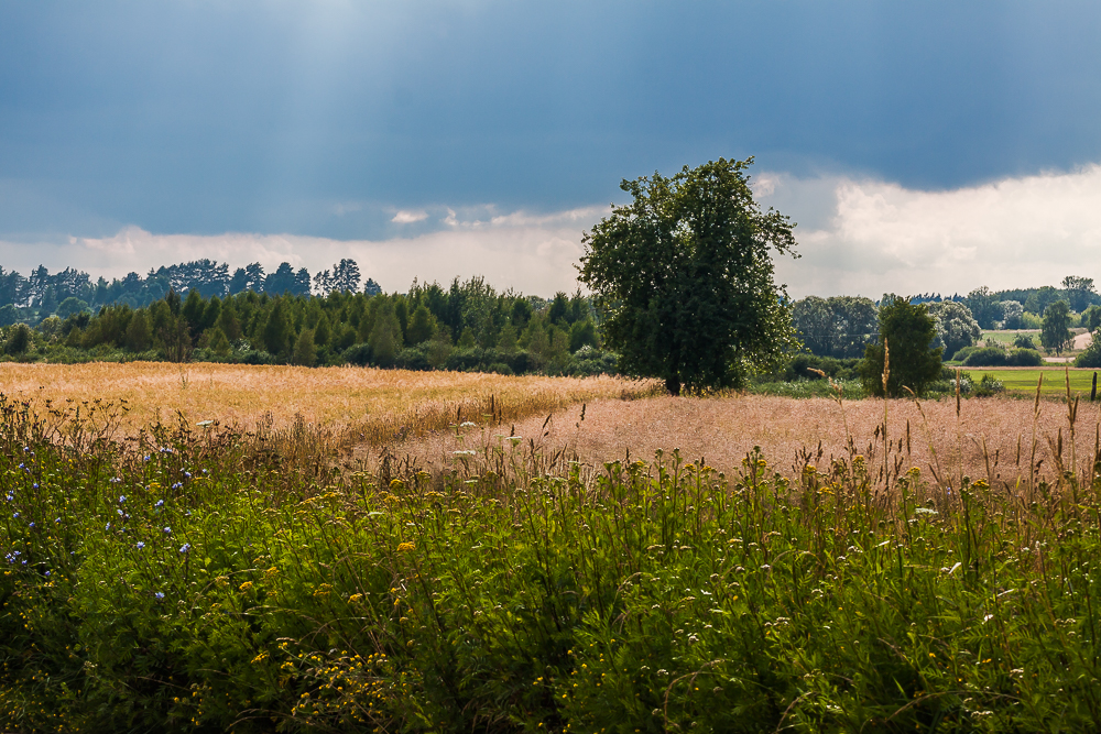 pola i przydroża