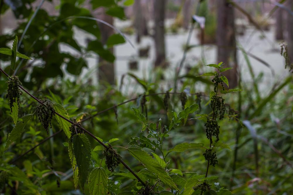 bobrowe rozlewisko