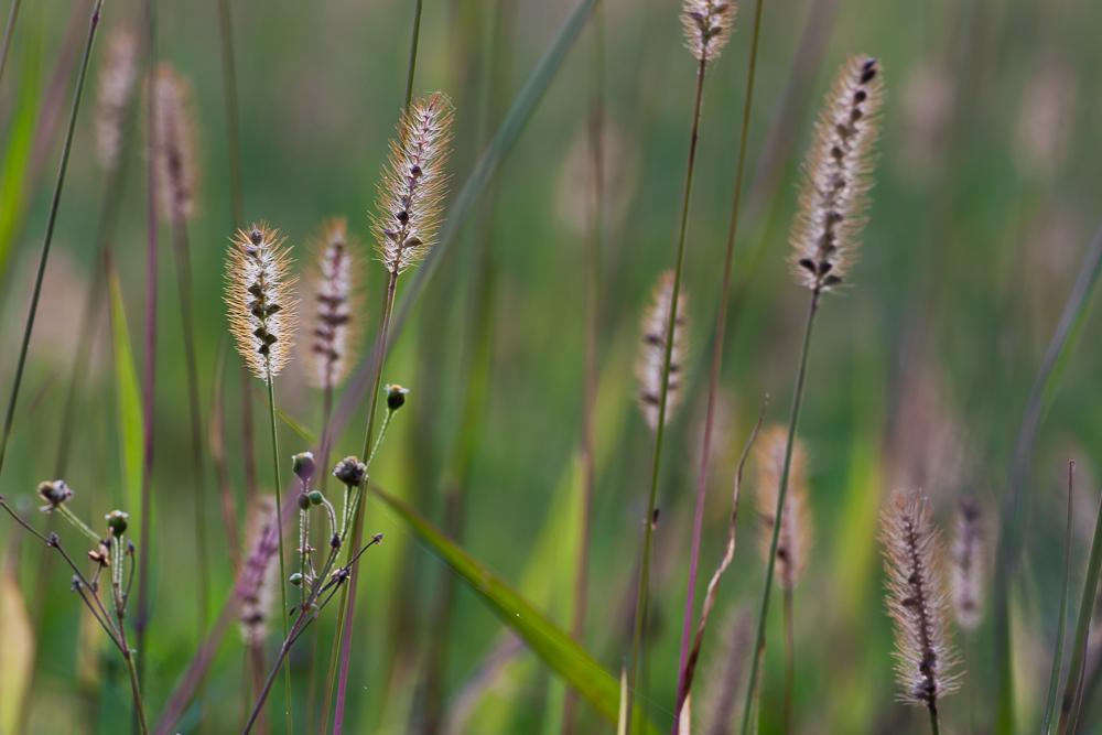 trawy pod światło