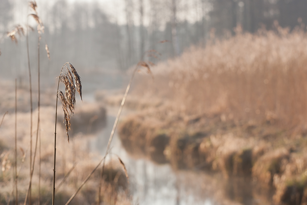 meandrująca rzeka
