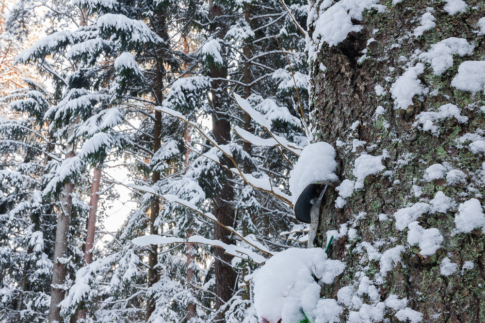 kapliczka w lesie