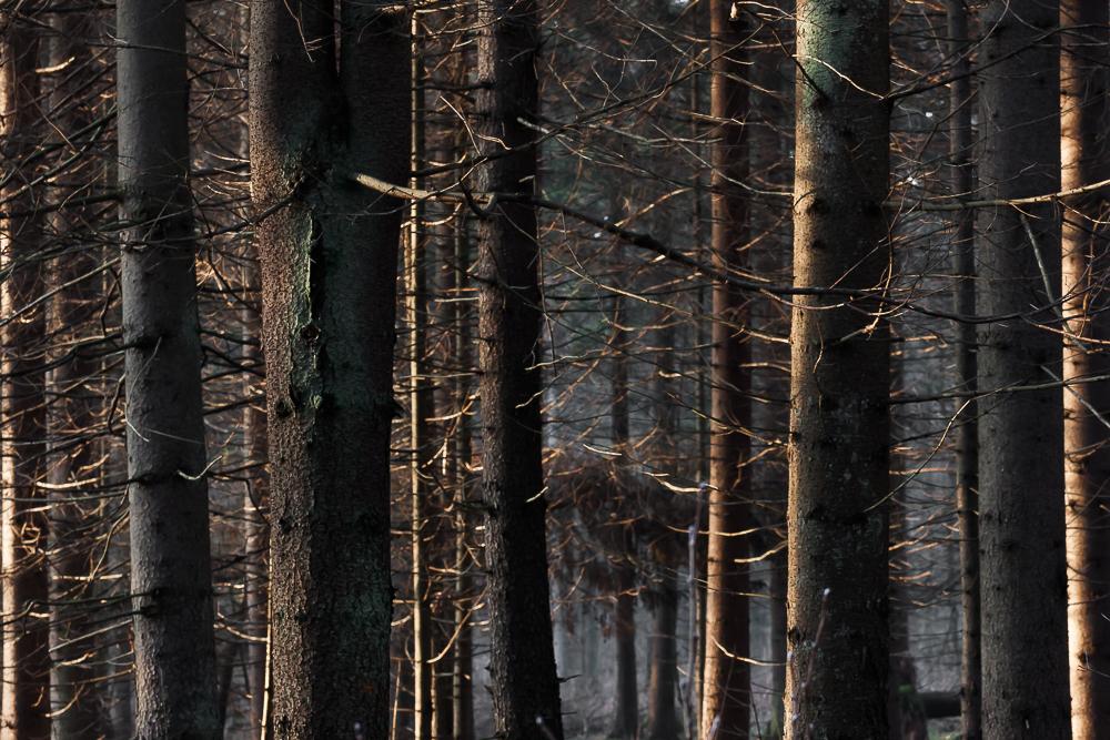 las, Puszcza Knyszyńska