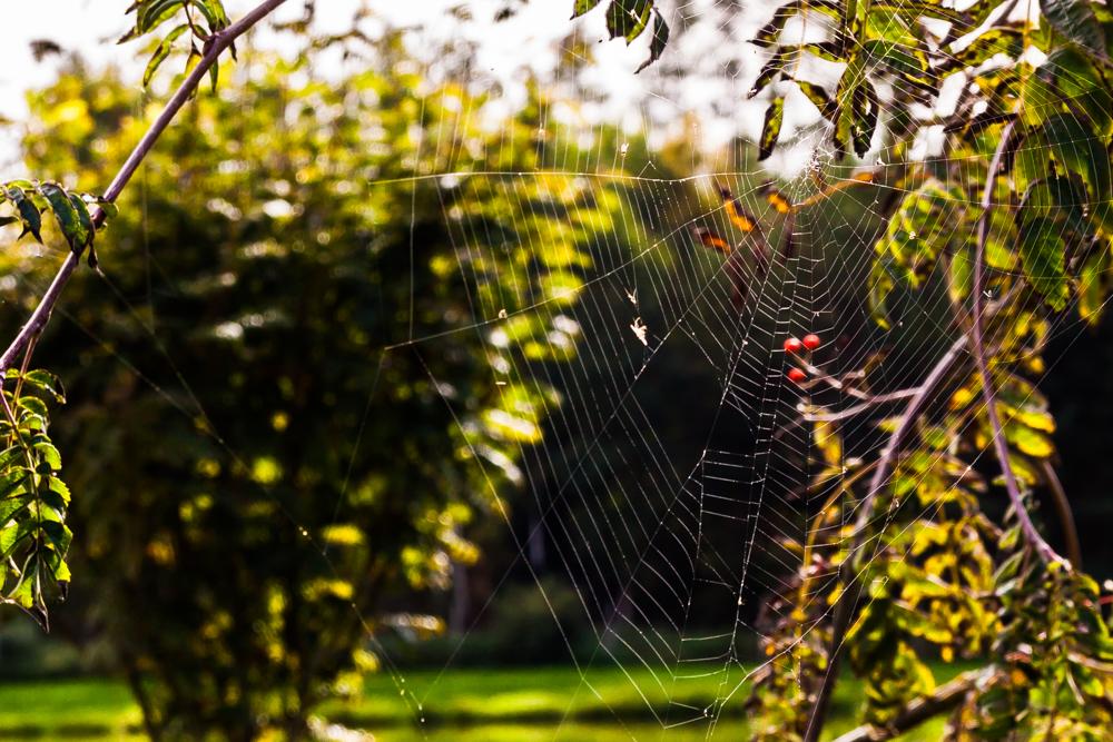 jesień, pajęczyny