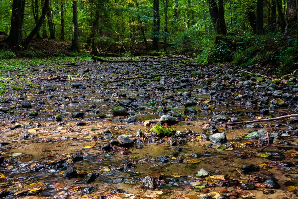 Leśne źródlisko