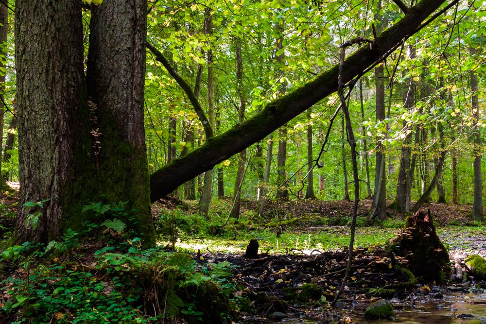 rezerwat Budzisk, leśne źródlisko