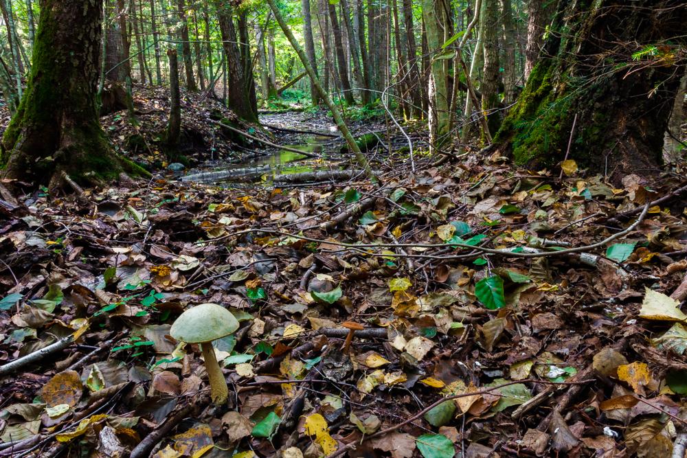 rezerwat Budzisk, grzyby