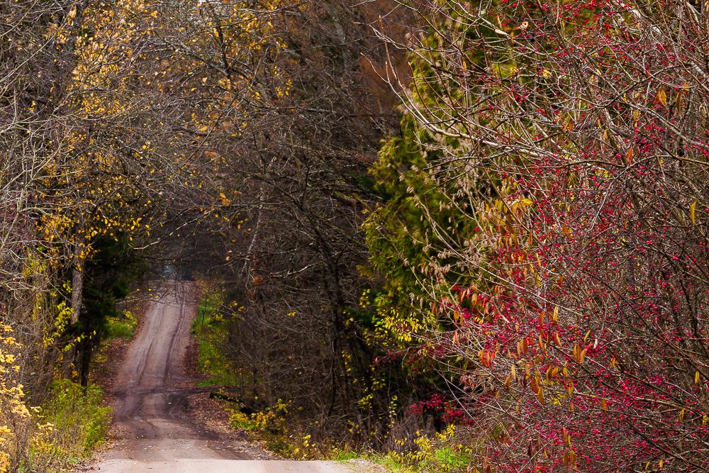 jesień, leśna droga