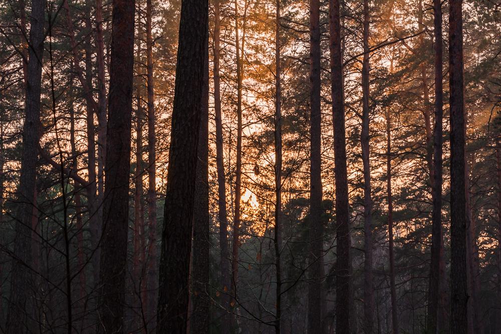 zachód słońca, las