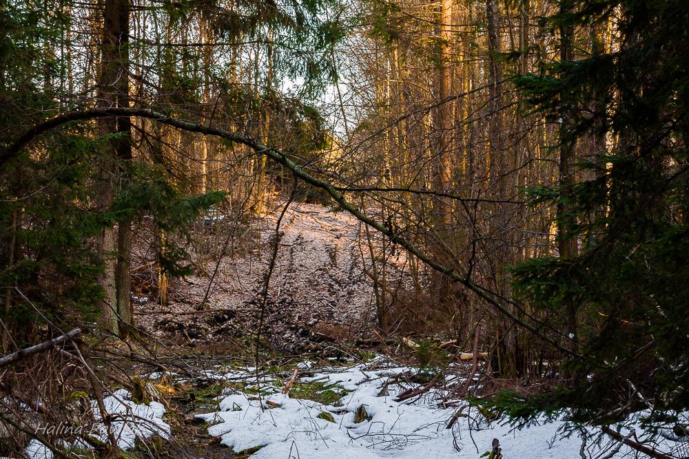 leśna droga na przedwiośniu