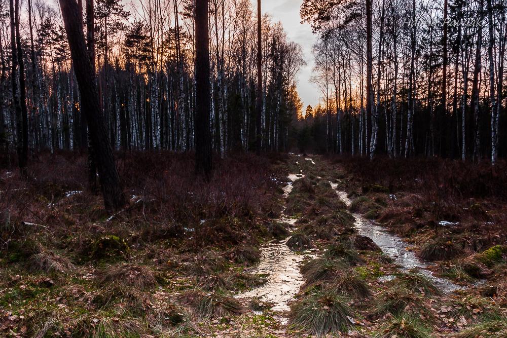 leśna droga