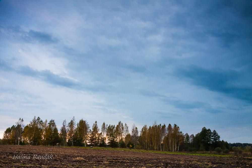 pola, niebo, wieczór