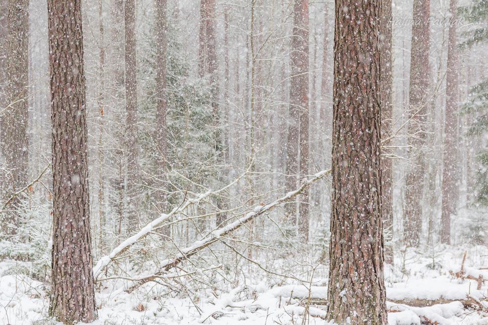 zamieć śnieżna, śnieżyca