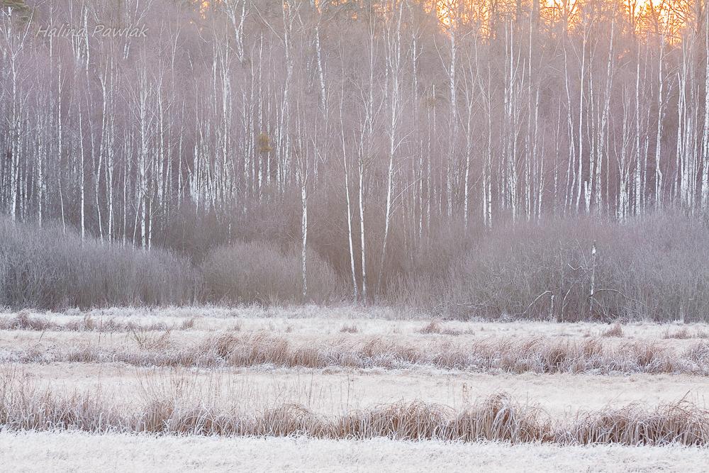 szron, śródleśne łąki