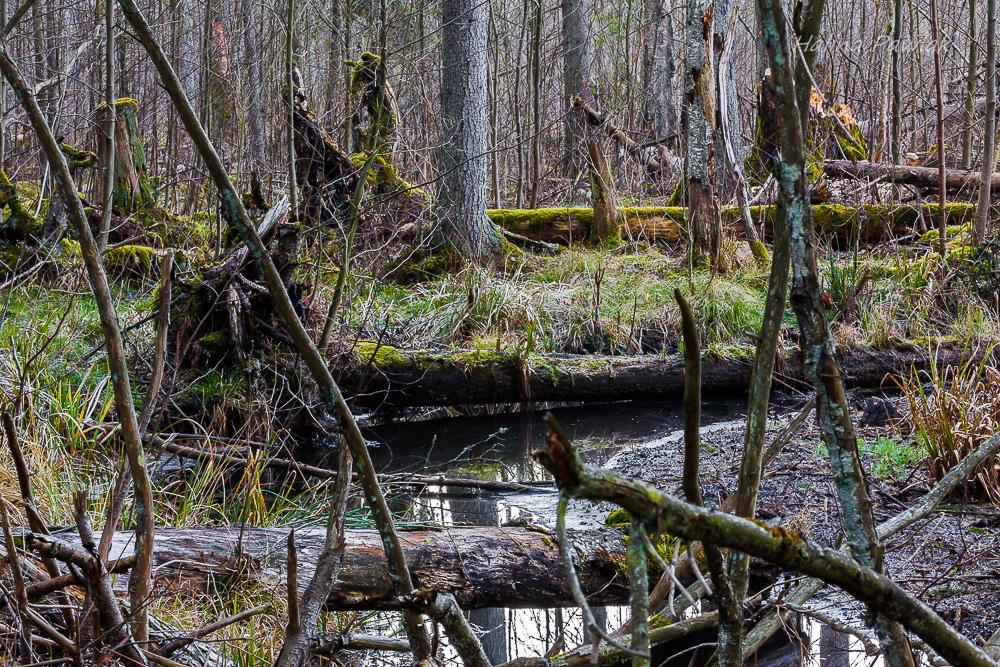 rzeka Jałówka, rezerwat Jesionowe Góry