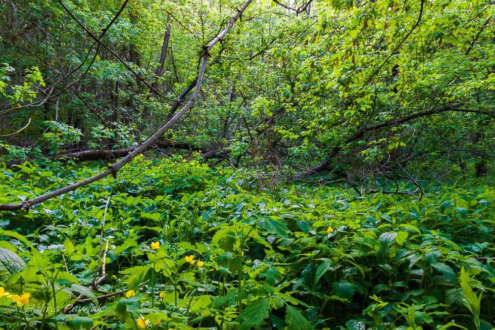 łęg, pokrzywa, glistnik jaskółcze ziele