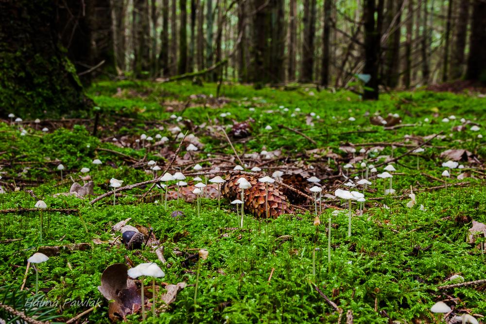 wrześniowe grzyby