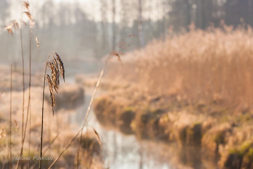 rzeka Jałówka